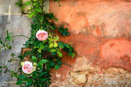 Flores - Auvers sur Oise - França Canvas Print