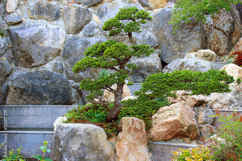 Bonsai tree in the composition on the background of rocks