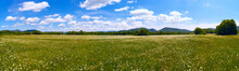 The Field Of Daisies On A Sunny Day. Panorama .