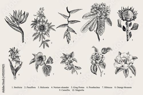 Foto  Exotic flowers set