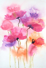FototapetaBeautiful Poppy flowers, watercolor painting