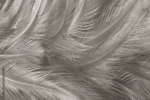 Black And White Vintage Color Trends Chicken Feather Texture BackgroundInterior Soft Luxury Gray Heaven