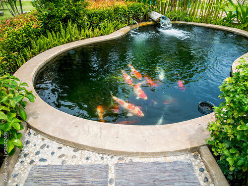 Fotografie, Obraz  koi fish in koi pond in the garden