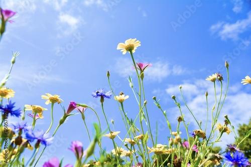 Plakat Kwiat łąka - lato łąka