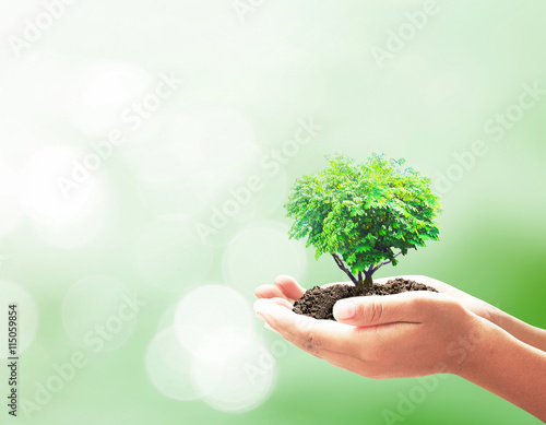 Fotografie, Obraz  World environment day concept: Human hands holding hearth shape of tree over blu