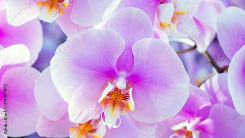 Spoed Foto op Canvas Iris Violet orchid in the garden.