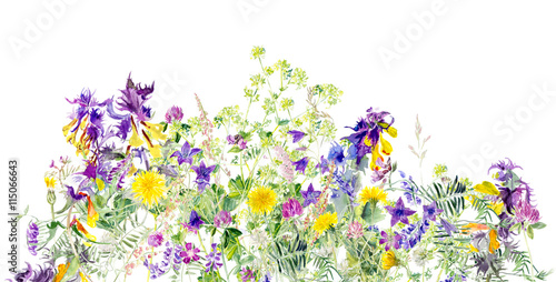 Fototapety, obrazy: Pattern of meadow flowers. Decoration with blooming flowers. White background. Watercolor hand drawn illustration.