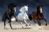 Fototapeta Konie - Three horse with long mane run gallop in sand