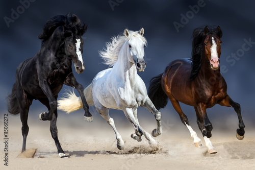 Three horse with long mane run gallop in sand