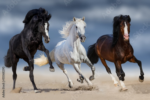 fototapeta na lodówkę Three horse with long mane run gallop in sand