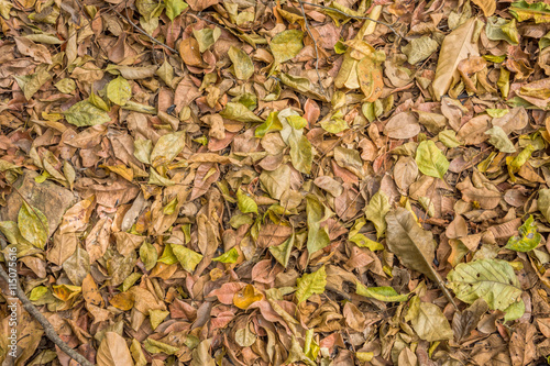 Valokuva  Fall foliage on the ground. Natural dry leaves in autumn.