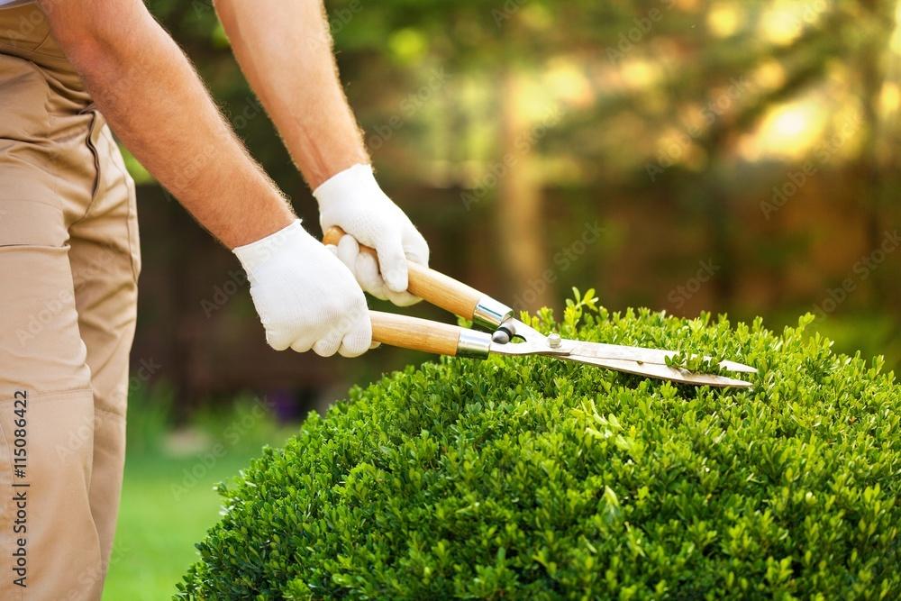 Fototapety, obrazy: Gardening.