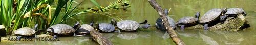 Deurstickers Schildpad Tortues de Floride