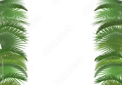 ef9693100fc Palm plant tree leaves background template. Exotic tropical festival  selebration greeting card. Palm poster wallpaper.