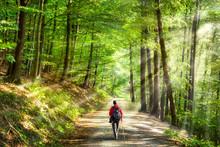 Spaziergang Im Grünen Wald
