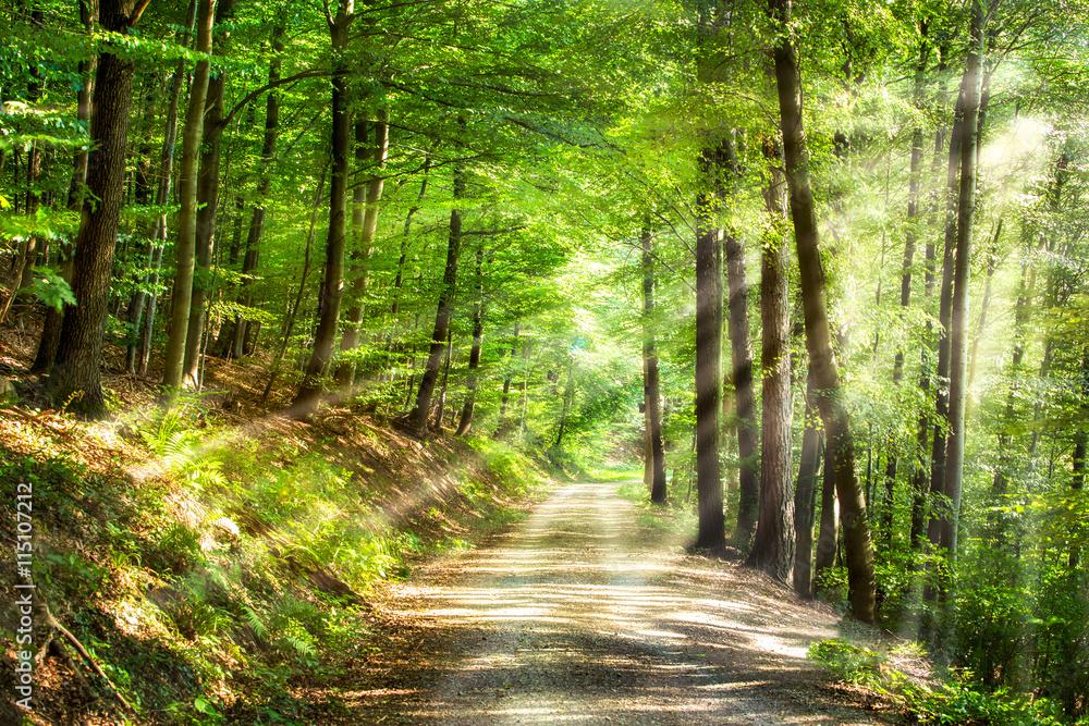 Fototapety, obrazy: Grüner Wald im Sommer mit Sonnenstrahlen