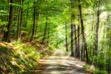 Fototapeta Las - Grüner Wald im Sommer mit Sonnenstrahlen