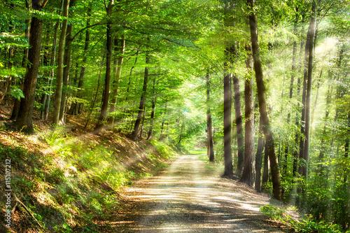 Grüner Wald im Sommer mit Sonnenstrahlen