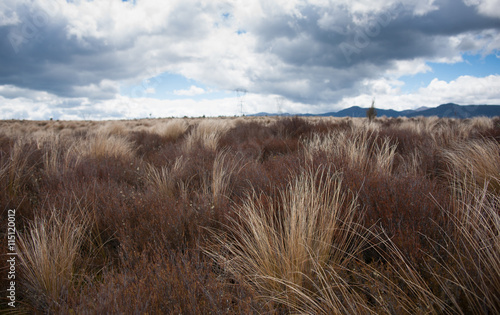 Desert Road tussock Wallpaper Mural