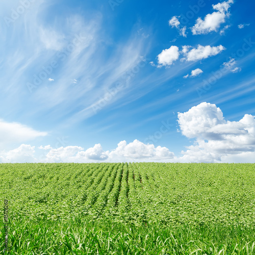 Fototapeten Wald green field and blue sky with clouds