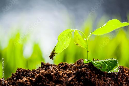 Fotobehang Planten New life. Young sprout in springtime,Closeup.