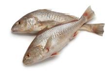 Pair Of Fresh Raw Koebi Fishes