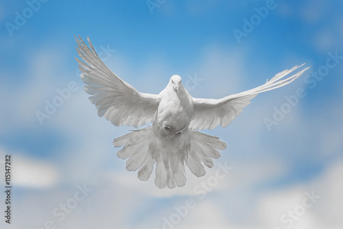 White dove is flying Canvas-taulu