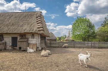 Fototapeta wiejska zagroda ze zwierzętami
