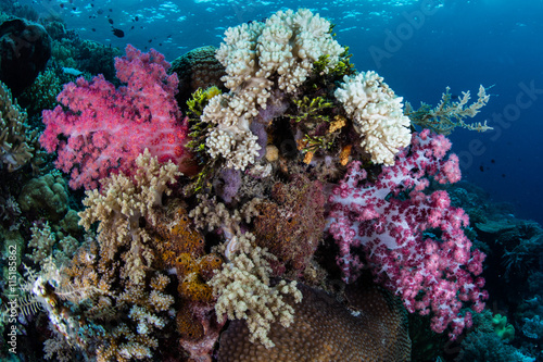 Photo  Colorful Soft Corals in Wakatobi National Park