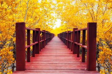 wooden bridge & autumn forest.