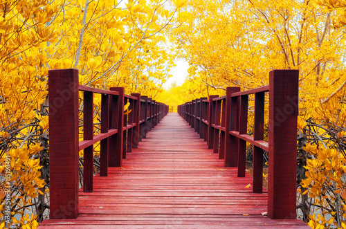 Montage in der Fensternische Brücken wooden bridge & autumn forest.