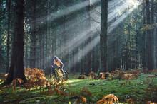 Female Mountain Biker Cycling ...