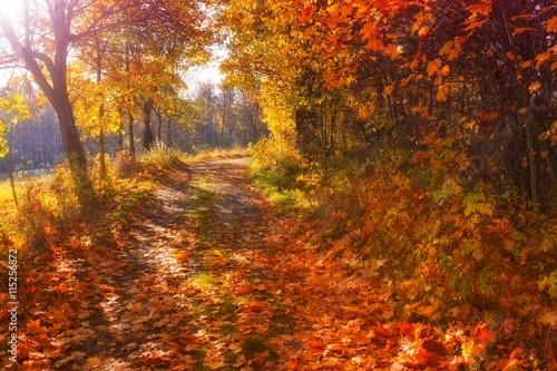 Poster Herfst Autumn park scene