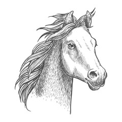 Lively little horse of arabian breed, sketch style