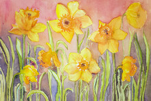 Yellow Narcissus In A Grassy E...