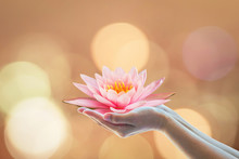 Vesak Day, Buddhist Lent Day, Buddha's Birthday Worshipping Concept With Woman's Hands Holding Water Lilly Or Lotus Flower
