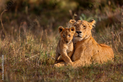 Spoed Fotobehang Leeuw Lion mother of Notches Rongai Pride with cub in Masai Mara, Kenya