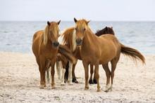 Wild Horses On Beach