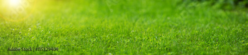 Fotobehang Gras Fresh green grass background in sunny summer day
