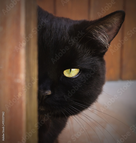 Foto op Canvas Panter Black Cat with yellow eyes peeping from behind a corner