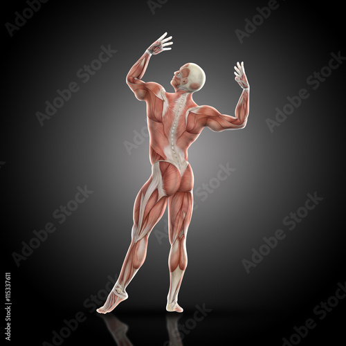 Fotografie, Tablou  3D render of a medical figure with muscle map in bodybuilding po