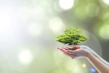 Ecology, eco-friendly growi...