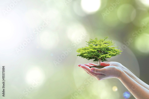 Photo Ecology, eco-friendly growing tree plant on volunteer's hand natural background