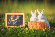 Two Little Dwarf Rabbits On Mathematics Lesson