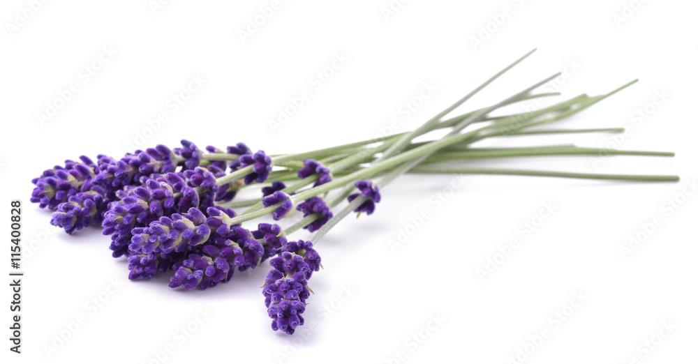 Fototapety, obrazy: Lavender flowers bunch