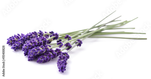 Photo sur Aluminium Lavande Lavender flowers bunch