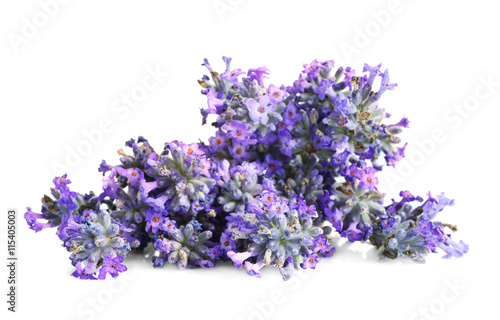 Garden Poster Lavender Beautiful lavender on white background