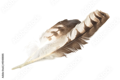 Eagle feather variegated isolated on white background