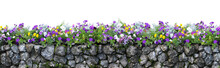 Flower And Stone Fence Isolated On White Background. Flower Garden.