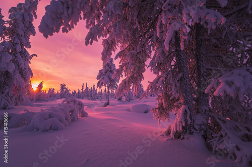 Printed kitchen splashbacks Eggplant Winter landscape with forest, cloudy sky, sun, sunset and trees